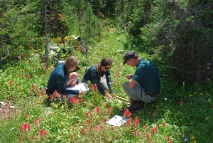 CRED Talk: Mending the Meadows - restoration on the summit of Mount Revelstoke @ Revelstoke Community Centre, Mac Pherson Rm |  |  |